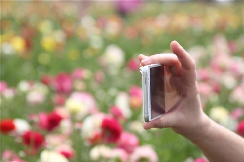 צילום פרחים
